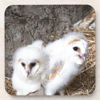 Porta Copos Pintinhos da coruja de celeiro em um ninho