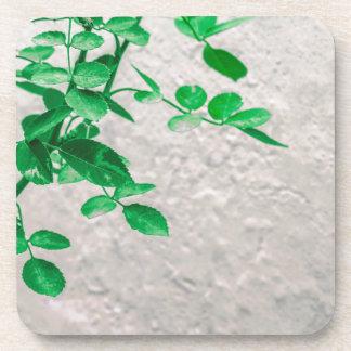 Porta Copos Plantas sobre a foto da parede