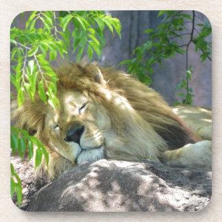 Porta Copos sesta do leão