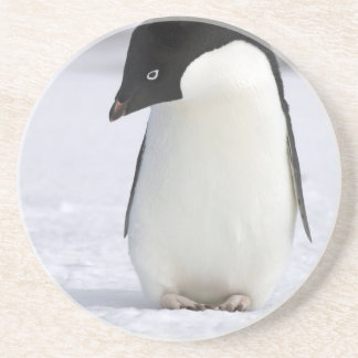 Porta copos só do pinguim