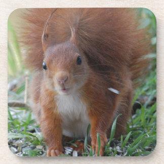 Porta Copos Squirrel esquilo Écureuil - Louis Glineu