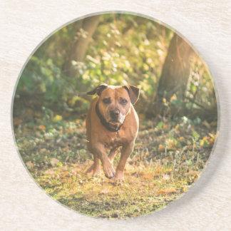 Porta-copos Staffordshire bull terrier