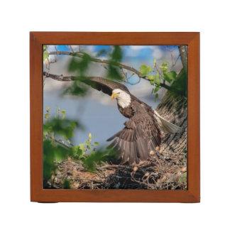 Porta-lápis Águia americana que sae do ninho
