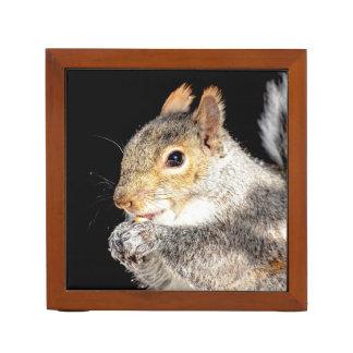 Porta-lápis Esquilo que come uma porca