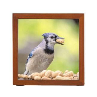 Porta-lápis Jay azul com um amendoim