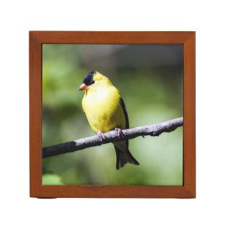 Porta Lápis Organizador americano da mesa do Goldfinch