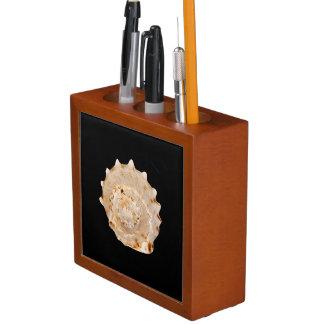 Porta-lápis Organizador da mesa de Shell do Conch