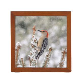 Porta Lápis pica-pau Vermelho-inchado na neve