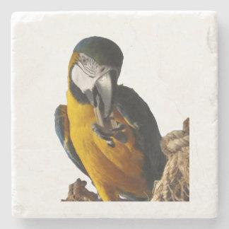 Portas copos bonitos do Macaw Porta-copos De Pedra
