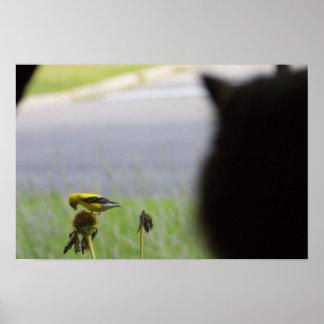 Pôster Almoço potencial - gato e pássaro