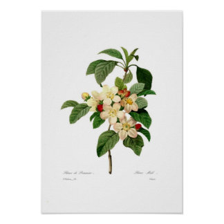 Poster Apple floresce