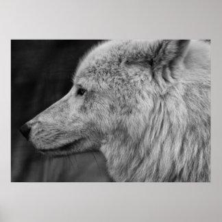 Poster Artc Wolf
