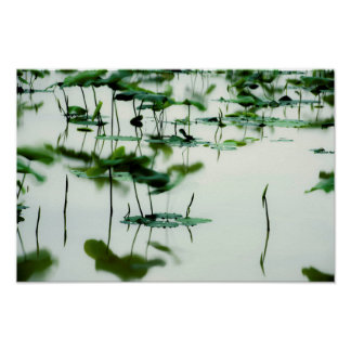 Poster Arte fotográfica -6 do Fairyland de Lotus