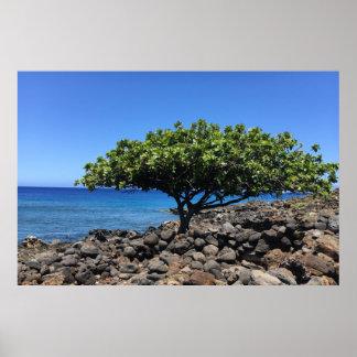 Pôster Árvore grande da ilha