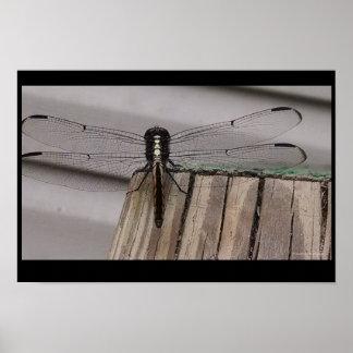Pôster Aterragem da libélula
