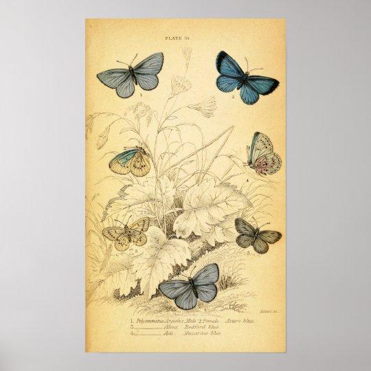 A lingua das mariposas online dating 4