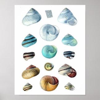 Poster azul dos Seashells do vintage Pôster