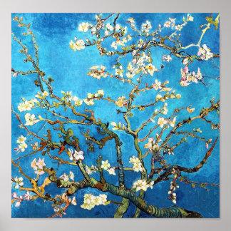 Pôster Belas artes de florescência da árvore de amêndoa