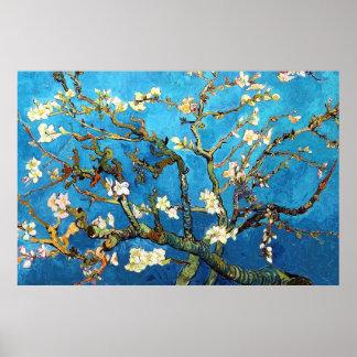 Poster Belas artes de florescência da árvore de amêndoa