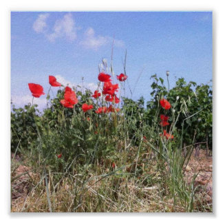 Poster bonito de papoilas e de videiras vermelhas