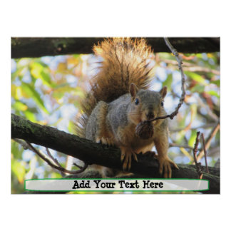 Poster bonito personalizado do humor do esquilo