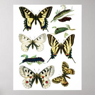 Pôster Borboleta colorida, Caterpillar & traça de