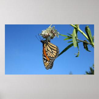 Pôster Borboleta de monarca contra o céu azul -