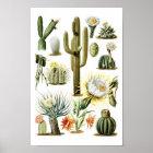Poster botânico da ilustração do cacto do vintage