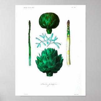 Poster botânico do vintage - alcachofra