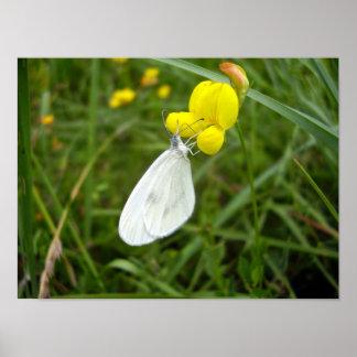 Poster branco de madeira da borboleta