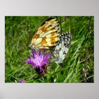 Poster branco marmoreado das borboletas