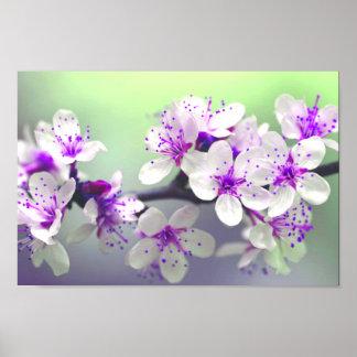 Poster branco & roxo vibrante da flor