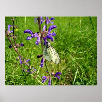 Poster branco veado preto da borboleta