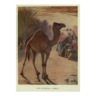 Pôster Camelo Pintura do vintage (1909)