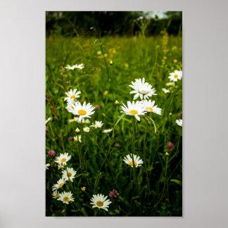 Poster Campos das margaridas e dos wildflowers