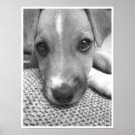 Pôster Cão