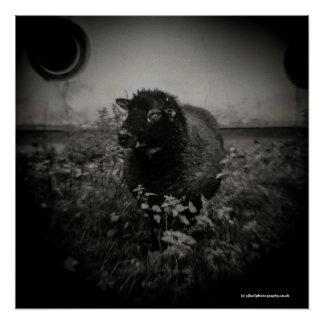 Pôster Carneiros - poster da arte da fotografia da câmera