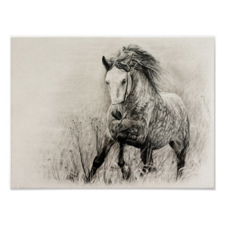 Pôster Cavalo branco no carvão vegetal