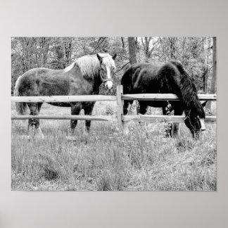 Poster Cavalos preto & branco -- Arte da fotografia de
