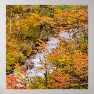 Pôster Cena colorida da paisagem da floresta, Patagonia