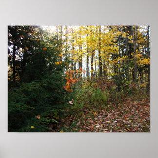 Pôster Cena da árvore do outono