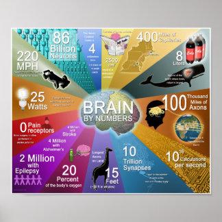 Poster Cérebro por números