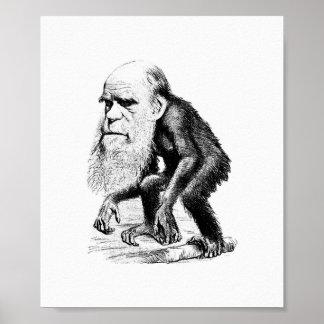Pôster Charles Darwin como um macaco