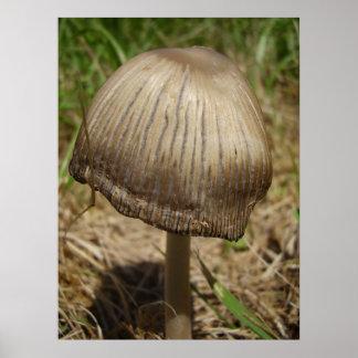 Poster cintilando do cogumelo de Inkcap
