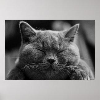 Poster cinzento feliz do gato