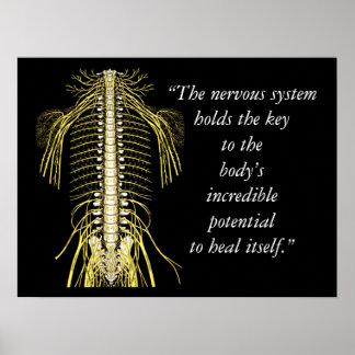 Poster Citações da quiroterapia & sistema nervoso dos