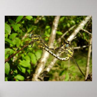 poster Clube-atado das libélulas