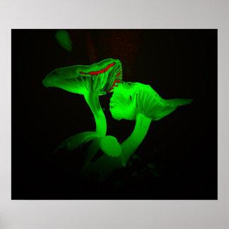 Pôster Cogumelos de incandescência