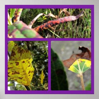 Pôster Colagem do painel das folhas de outono três