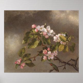 Poster Colibri e flores de Apple